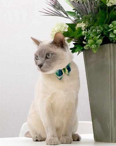猫首輪 ゴロにゃんオリジナルデイリー猫首輪 商品一覧