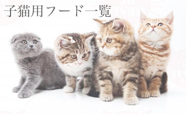 子猫用のキャットフード ドライ ウェット 猫缶