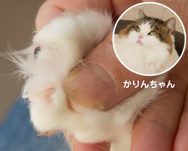 爪とぎ特集 〜 かりんちゃんの爪