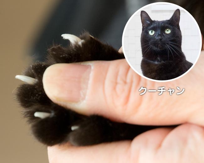 爪とぎ特集 〜 クーチャンの爪
