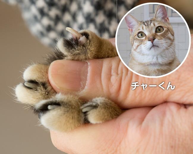 爪とぎ特集 〜 チャーくんの爪