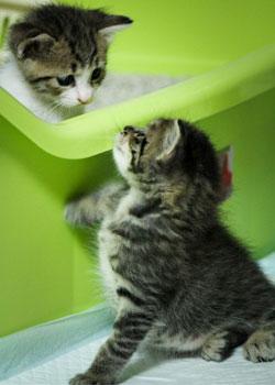 猫のトイレ用品 猫用品専門店ゴロにゃん 猫用トイレタリー商品一覧